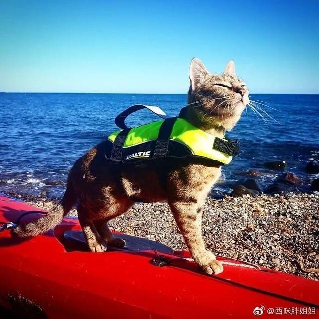 芬兰一男子带宠物猫一起旅行,画面非常有爱