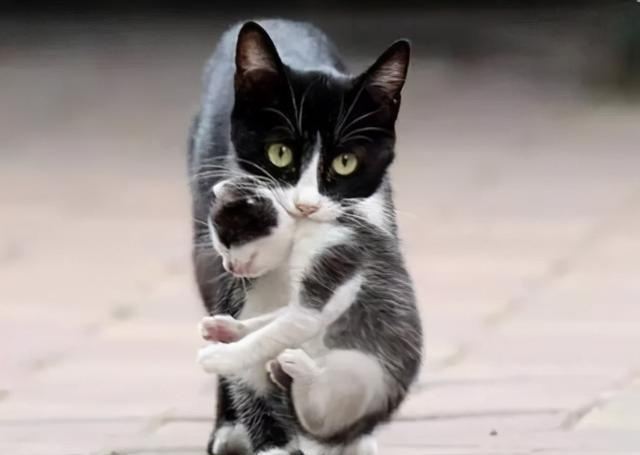 """Why does a female cat """"baby cat"""" for its owner? After knowing the reason, I was quite moved"""