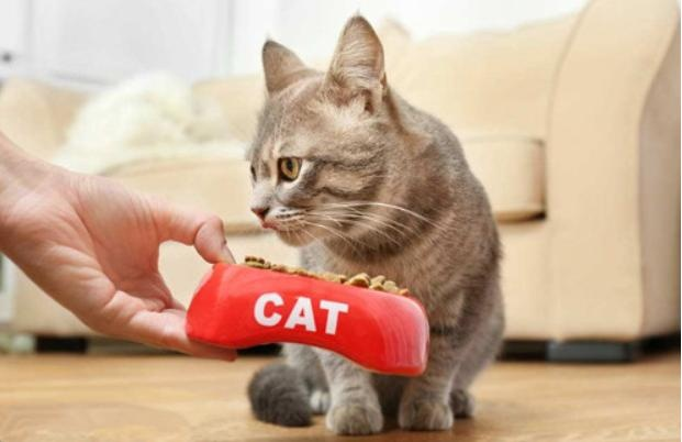 """Picking out """"good cats"""" from a nest of kittens, people who know how to do it, will use these methods"""
