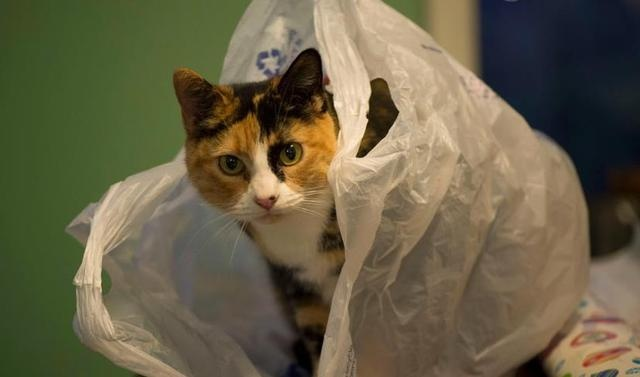 """11 Cats """"Weird Behavior"""": Watch you go to the toilet, play with water, how many of your cats have been in?"""