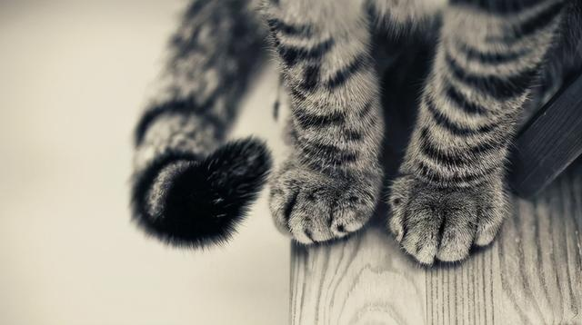 """the shape of the claw pad determines the character of the cat? teach you to look at the claws and see the """"cat"""""""