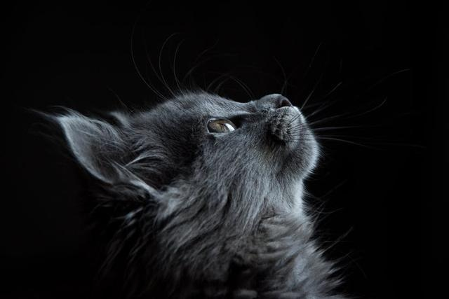 even if the cat is very cute, but there are these big disadvantages, after watching you will still keep
