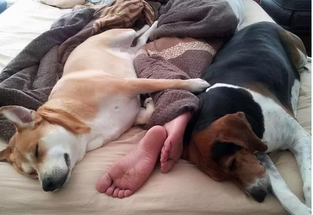 dogs like to sleep next to their owners for a reason